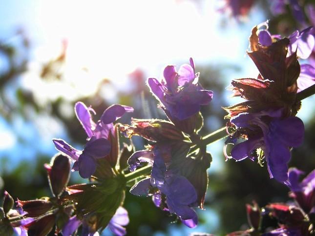Letný kvet
