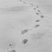 Krok za krokom