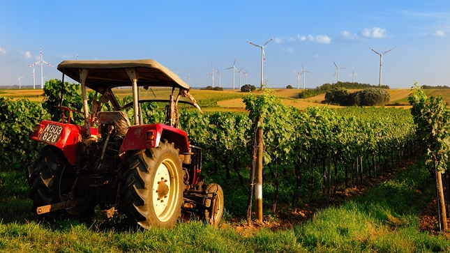 Traktor vor Weinbergen