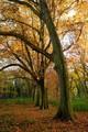 Jeseň v Rusovciach