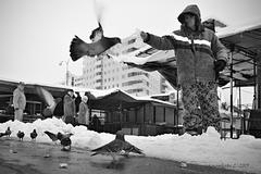 Dobré holuby sa vracajú ...