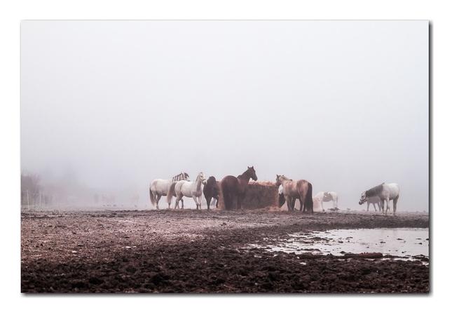 mrazivé ráno  na farme ll.