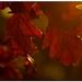 Jeseň v januári