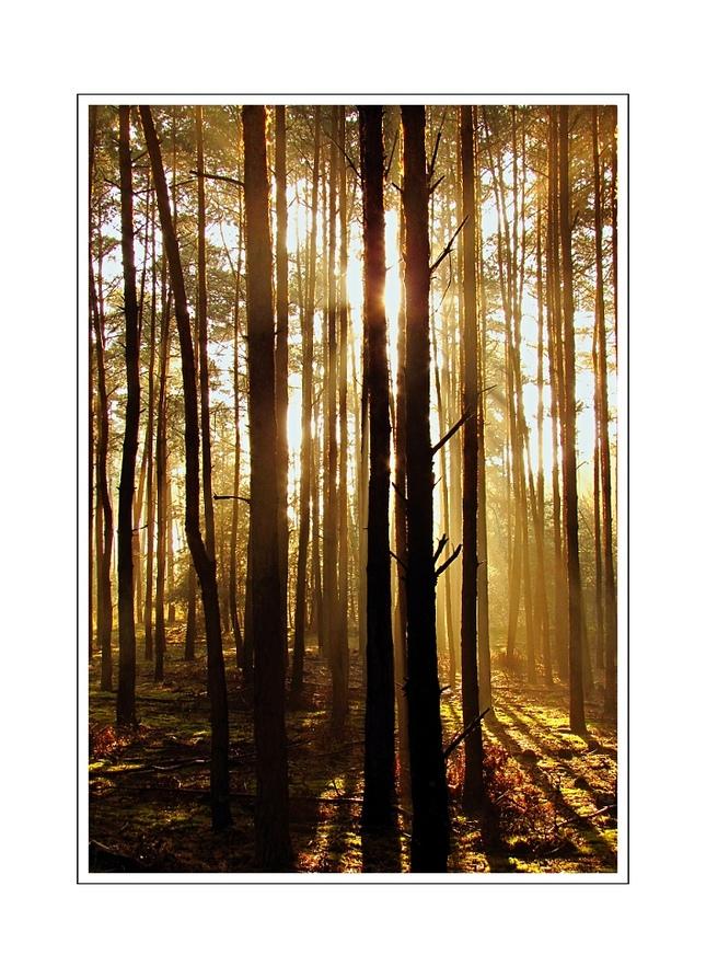 Lesné ráno