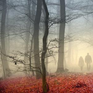 Dvaja v hmle