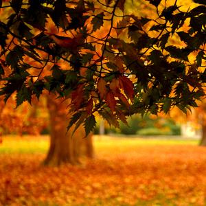 Jesen pod stromom