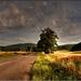 Cestou do obce Borinka