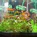 nsano akvarium