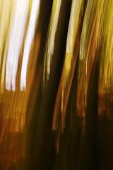 les v plamenoch