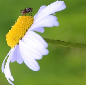 Kvetový relax