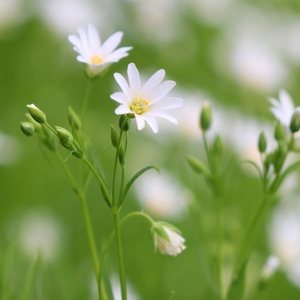 Zeleno biela