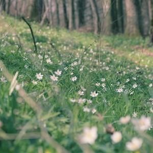 Kvetová