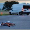 Smrť na cestách