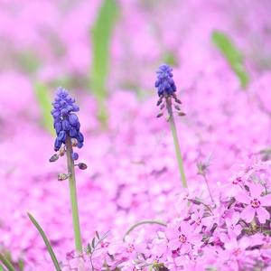 Kvetinová