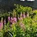 Flora vo Vysokých tatrách