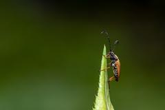 Život chrobáka