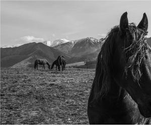 Čierny žrebec