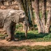 Slon na prechádzke