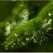 Zelený svet...