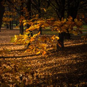 Spomienka na jeseň