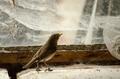 Červienka v zajatí pavučín