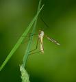 Komárová