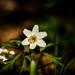 Prebúdzanie jari
