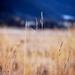 Steblá trávy 2