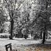 Jesenny Park