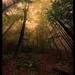 Moc Lesa