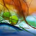 Farebný svet