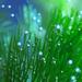Výdychy akvarijných rastlín