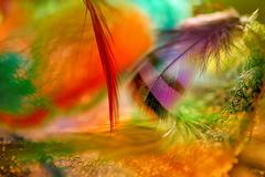 V krajine farieb