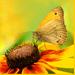 Motýlie hody... vo farbách leta