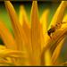 Žltá k žltej sadá...