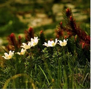 Tatry kvitnú III.