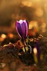 ...konečne jar...
