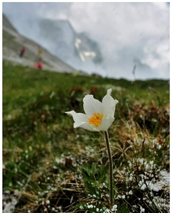 Tatry kvitnú II.