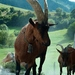 alpská koza na Slovensku