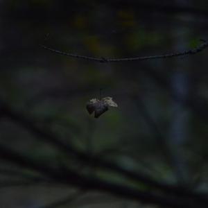 leviting  leaf