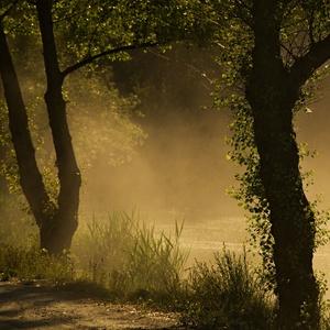 fog among the trees