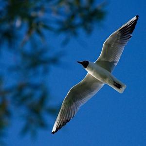 below seagull