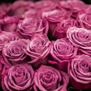 Ružová paleta