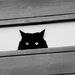 """""""strážca balkóna"""""""