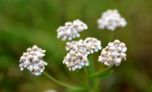 the kvety