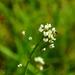 Na kvetine