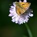 Iba obyčajný motýlik...