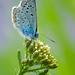 Modrý v modrom