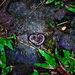 a centipedes love