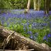 Woodland Blooms